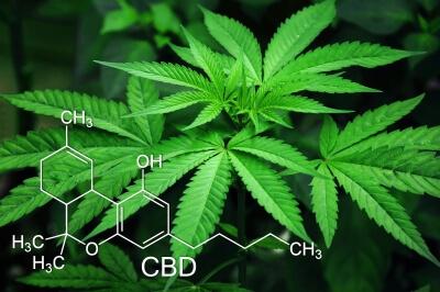 медична марихуана в Україні