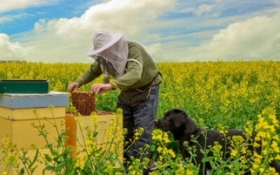 Як бджолярам отримати дотації з держбюджету